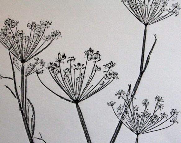 Black fennel 2 detail