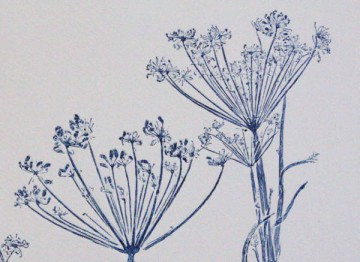 Blue fennel 1 detail