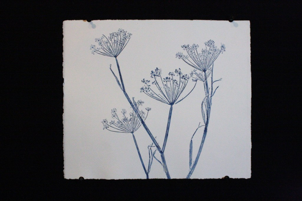 Blue fennel  1