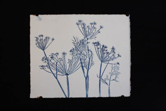 Blue fennel 2