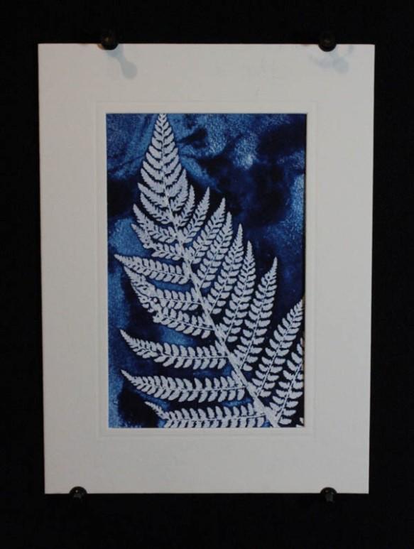 Blue fern 1