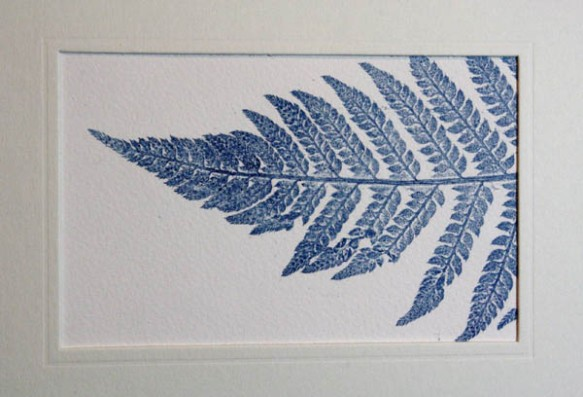 Blue fern 3 mounted