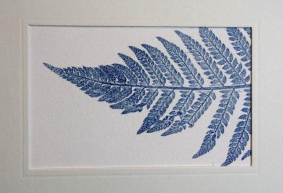 Blue fern 3 mounted