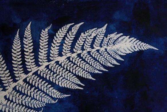 Blue fern 5