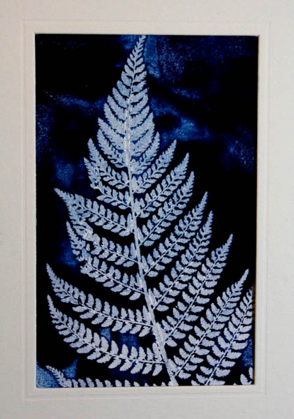 Blue fern mounted 2 copy