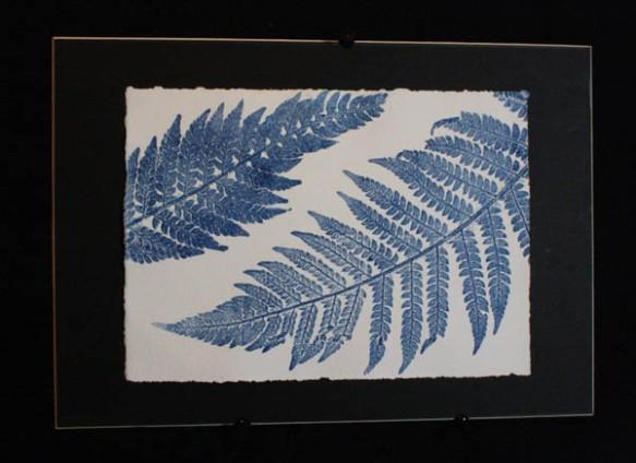 Blue ferns 4